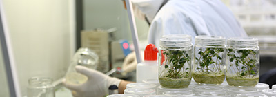 Tissue Culture Laboratory was Put into Service