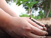 Dünya Ormancılık Günü ve Orman Haftası Kutlu Olsun!