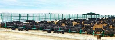 Çiftlikler Kurulmaya Başlandı. (Taşağıl Besi Çiftliği, Damızlık Angus Üretim Çiftliği, Şekersüt Üretim Çiftliği, Çumpaş-Danabank Süt Üretim Çiftliği, Göçü Besi Çiftliği, Çumra-Erentepe Süt Üretim Çiftliği, Seydişehir Gevrekli Süt Üretim Çiftliği)