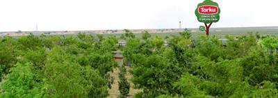 Konya Şeker ve Torku Ormanlarına Dikilen Ağaç Sayısı 10 Milyonu Aştı