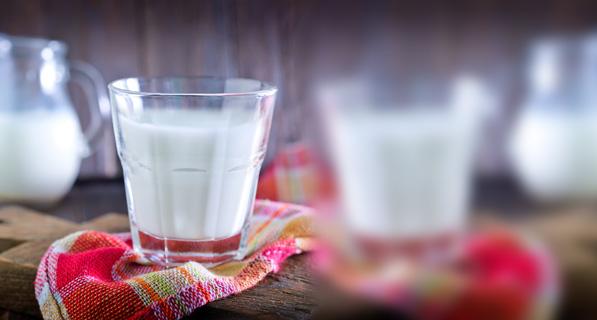 كاتلوج الحليب و منتجات الحليب