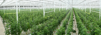 Greenhouses were put into Service