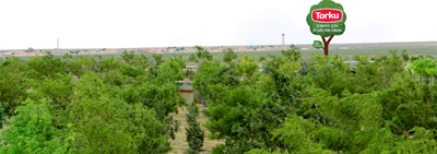 Number of Trees, Planted in Konya Seker and Torku Forests, Reached 20 Million