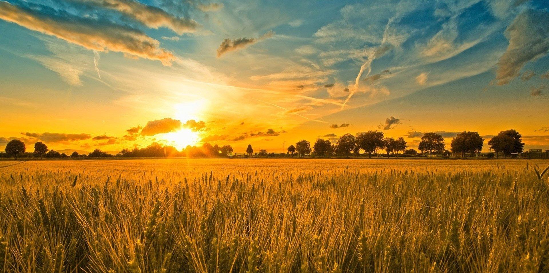 Torku Özel Amaçlı Buğday Unu